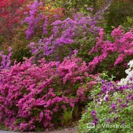 Errores más comunes en el cultivo y mantenimiento de jardines