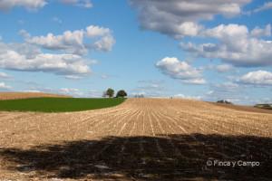 finca y campo agro