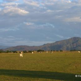 La producción pecuaria: representación gremial en Colombia