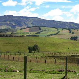 La importancia de los proyectos agropecuarios