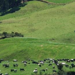 La planeación en las empresas agropecuarias