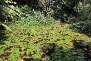 La piscicultura en colombia finca y campo for Cria de peces ornamentales
