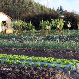 Cultivos asociados
