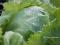 Fertilización de cultivos: absorción de nutrientes por las plantas