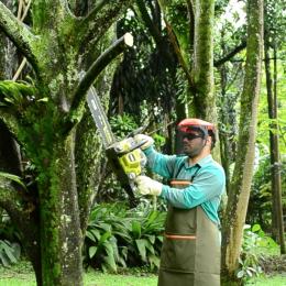 Identifique y maneje los defectos peligrosos de los árboles