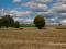 Análisis de la empresa agropecuaria: eficiencia de la producción