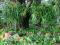 La fertilización foliar