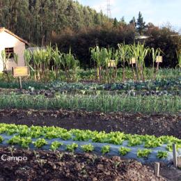 Buenas prácticas agrícolas desde BPA desde el punto de vista agroempresarial