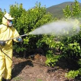 Los plaguicidas: problemas en ambiente y salud